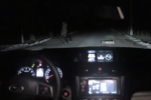 Crazy-Russina-Subaru-advert-Dog-gets-run-over-by-car-what-happens-next